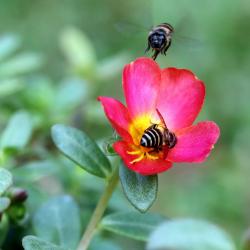 About Pollinator Garden